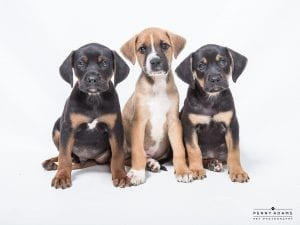 DA9Puppies