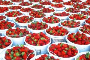 Strawberries at the Franklin Farmers Market, shopping in downtown Franklin, TN, antiques, family activities, fun things to do and more!