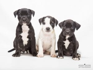 ISO2Puppies