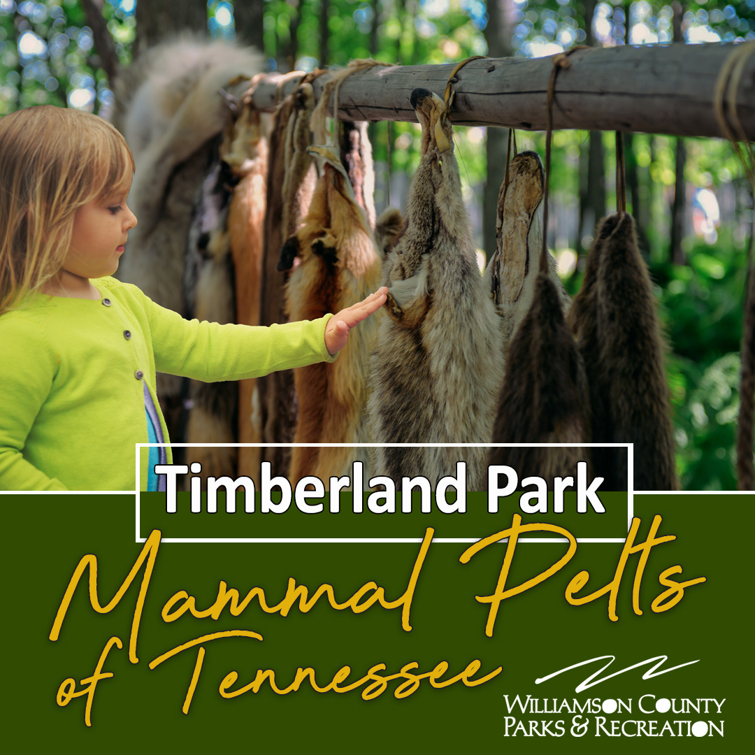 Kids activities in Franklin, TN at Timberland Park.