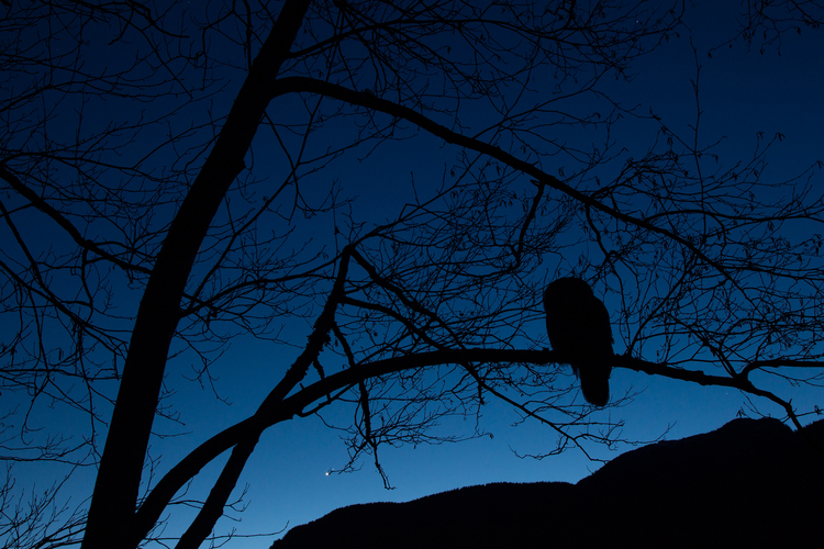 Bird at night, night hikes in Brentwood, TN at Owl's Hill Nature Sanctuary.