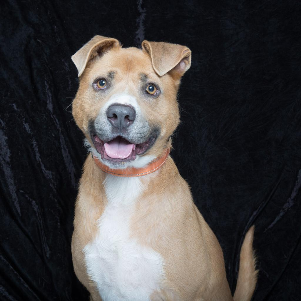 Bruno, Williamson County Animal Center Pet of the Week
