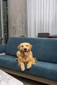 Dog-Friendly Hotel Franklin & Nashville