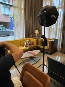 Dog-Friendly Hotel Lobby in Nashville