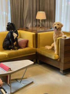 Dog-Friendly Hotel Nashville Tenn 2
