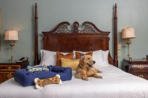 Dog-Friendly Hotel Nashville Tenn