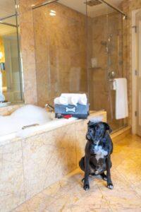 Dog-Friendly Hotel Options in Nashville & Franklin