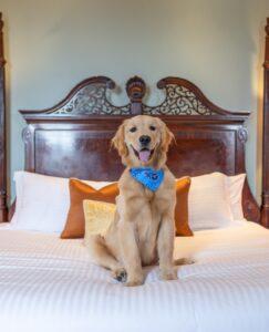 Dog-Friendly Hotel in Nashville Tennessee