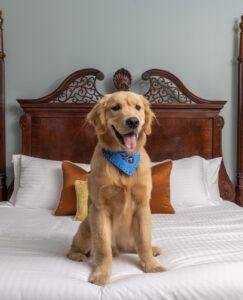 Dog-Friendly Hotels Franklin, Nashville, Brentwood