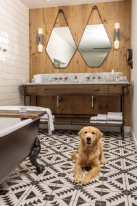 Dog-Friendly Hotels Nashville, Franklin TN