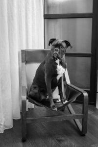 Dog-Friendly Hotels in Franklin and Nashville