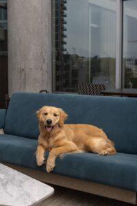 Dog-Friendly Hotels in Nashville & Franklin