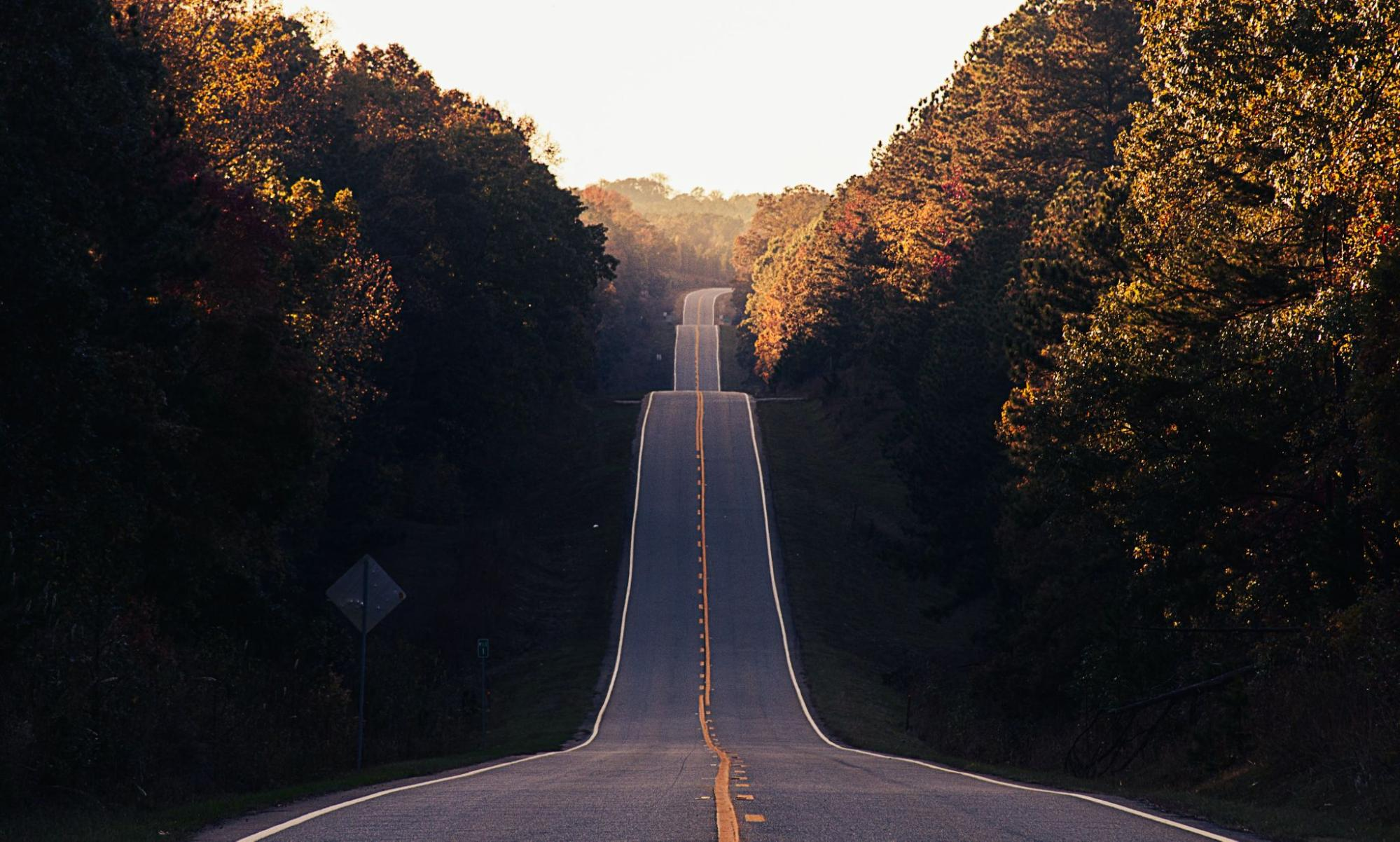 A long road through trees, enjoy fall activities in Franklin, TN and Brentwood, TN, family activities, adult activities and more!